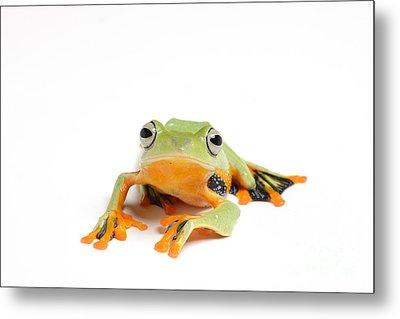 Gliding Frog Metal Print by Scott Linstead