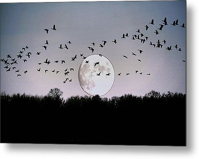 Guided By The Moon Metal Print by Larry Trupp