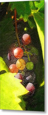 Harvest Time Metal Print by Ron Regalado