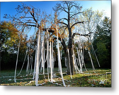 Huge Tree Covered In Toilet Paper Metal Print by Amy Cicconi