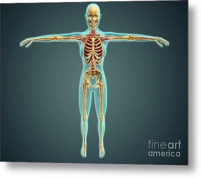 Human Body Showing Skeletal System Metal Print