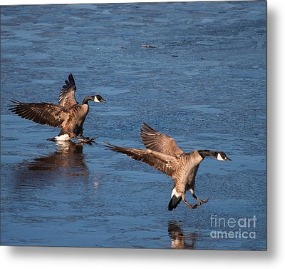 Metal Print featuring the photograph Icy Landing by Dale Nelson