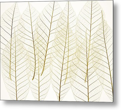 Layered Leaves Metal Print by Kelly Redinger