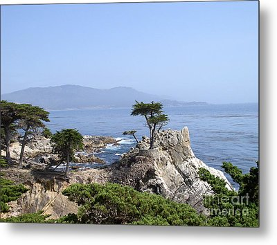 Metal Print featuring the photograph Lone Cypress by Bev Conover
