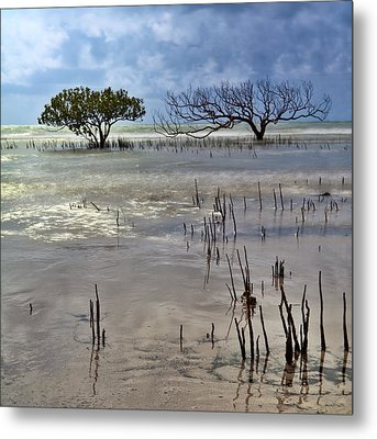 Mangrove Tree In Blurred Sea Metal Print by Dirk Ercken