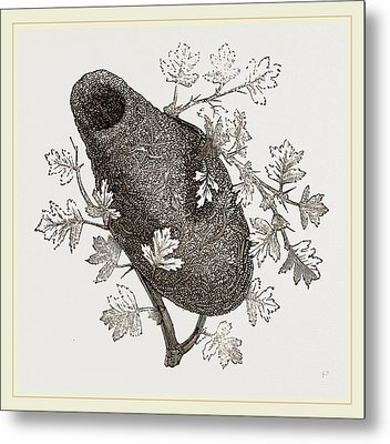 Nest Of Long Tailed Titmouse Metal Print by Litz Collection