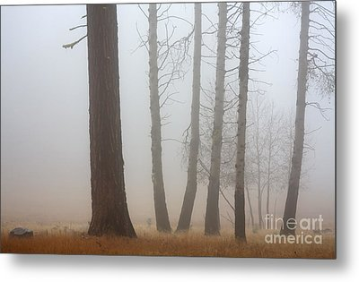 Out Of The Fog Metal Print by Mike  Dawson