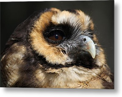 Owl Metal Print by Paulette Thomas