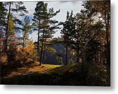 Path In Autumn Light Metal Print by Bogdan M Nicolae