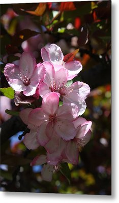 Metal Print featuring the photograph Spring by Vadim Levin