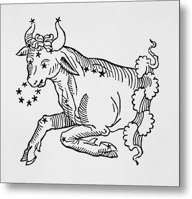 Taurus  Metal Print by Italian School
