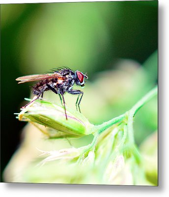 The Fly Metal Print by Tommytechno Sweden
