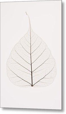 Transparent Leaf Metal Print by Kelly Redinger