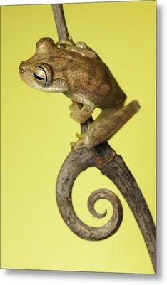 Tree Frog On Twig In Background Copyspace Metal Print by Dirk Ercken