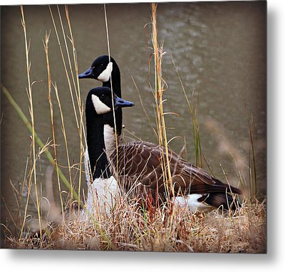 Watchful Metal Print by Mary Zeman