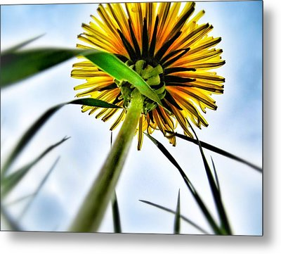 What's Up? Metal Print by Marianna Mills