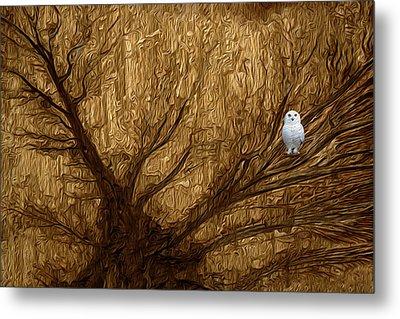 White Owl Metal Print by Jack Zulli