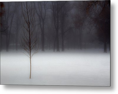 Winter In The Park Metal Print by Utah Images