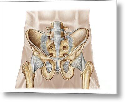 Anatomy Of Human Pelvic Bone Metal Print