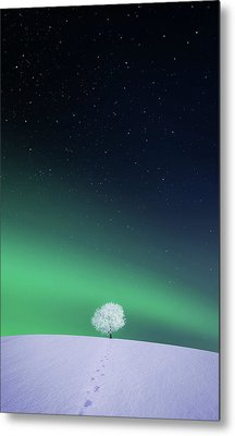 Apple Metal Print by Bess Hamiti