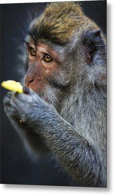 Monkey - Bali Metal Print by Matthew Onheiber