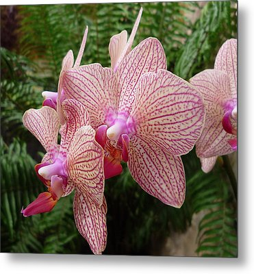 Orchid No.7 Metal Print by Gregory Young