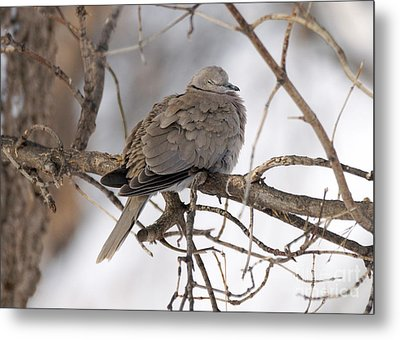 Sleeping Beauty Metal Print by Lori Tordsen