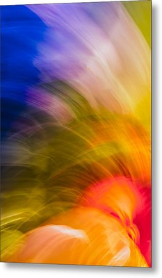 Summer Bloom Metal Print by Jon Glaser
