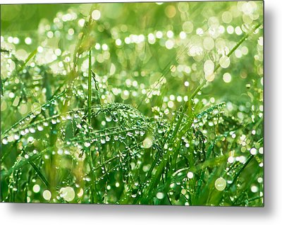 Summer Morning Metal Print by Mircea Costina Photography