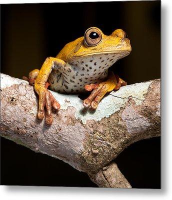 Tree Frog On Twig In Rainforest Metal Print by Dirk Ercken