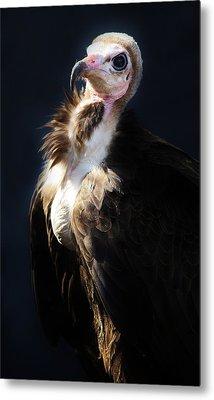 Vulture Metal Print by Paulette Thomas