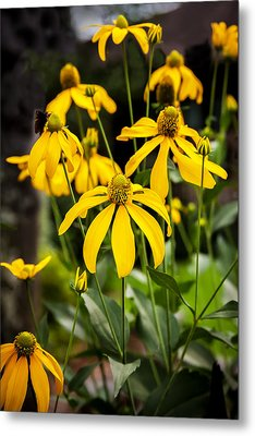 Coneflowers Echinacea Yellow Painted Metal Print