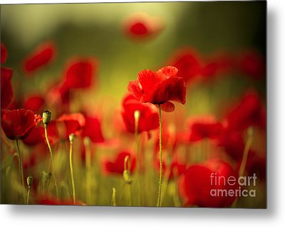 Poppy Dream Metal Print by Nailia Schwarz