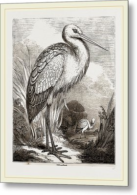Stork Metal Print by Litz Collection
