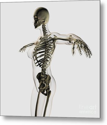 Three Dimensional View Of Female Metal Print by Stocktrek Images