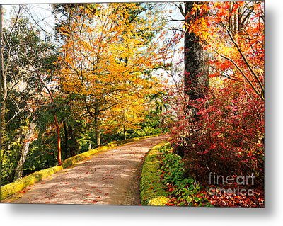 Autumn Colors Metal Print by Gaspar Avila