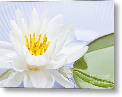 Lotus Flower Metal Print by Elena Elisseeva