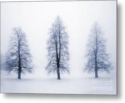 Winter Trees In Fog Metal Print by Elena Elisseeva