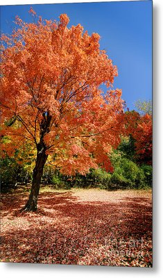 A Blanket Of Fall Colors Metal Print by Amy Cicconi