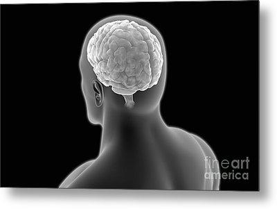 Conceptual Image Of Human Brain Metal Print by Stocktrek Images