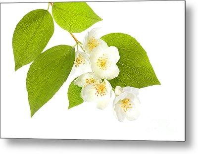 A Beautiful White Flower Metal Print