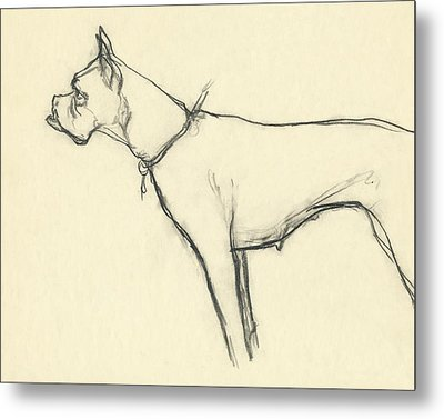 A Boxer Dog Metal Print
