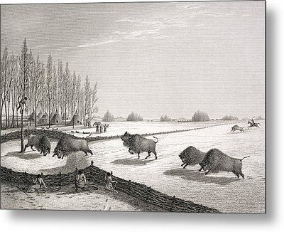 A Buffalo Pound Metal Print by George Back