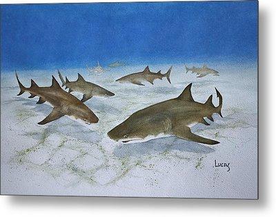A Bushel Of Lemon Sharks Metal Print by Jeff Lucas