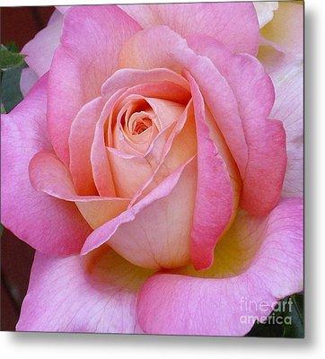 A Classic Rose Metal Print by Paul Clinkunbroomer