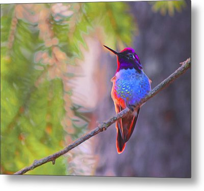Metal Print featuring the digital art A Hummingbird Resting In The Evening Light. by Timothy Hack