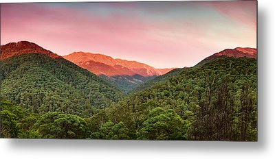 A Natural Highlight Metal Print by Mark Lucey