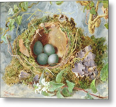 A Nest Of Eggs, 1871 Metal Print by Jabez Bligh