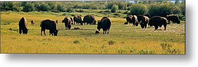 A New Beginning Grand Teton National Park Metal Print by Ed  Riche