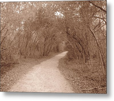 Metal Print featuring the photograph A Path In Life by Beth Vincent
